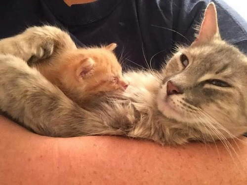 子を亡くした母猫と親を亡くした子猫06