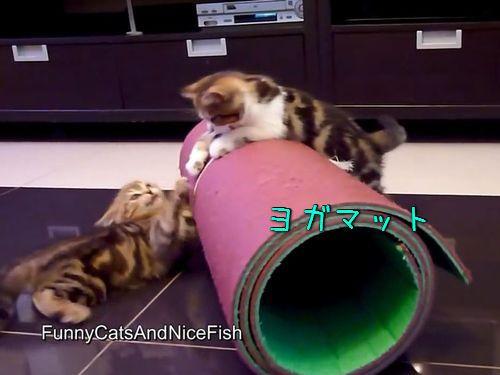 ヨガマットと子猫00