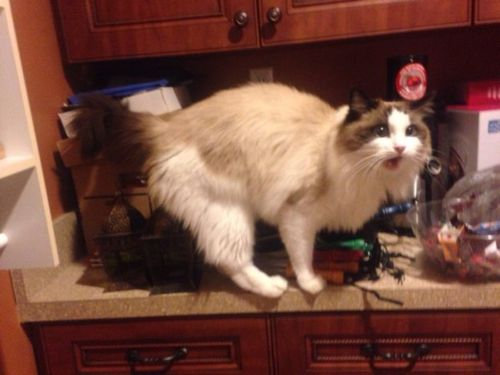帰宅したら…見知らぬ猫がいる00
