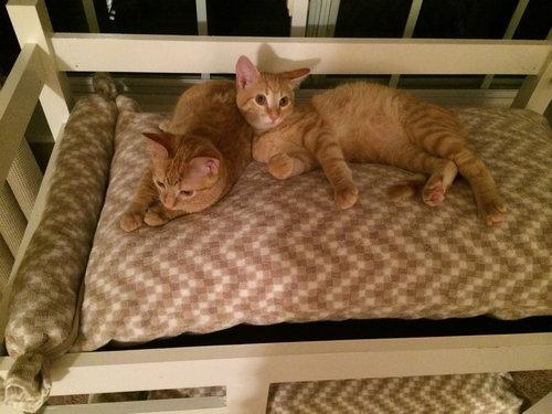 猫のための2段ベッド04