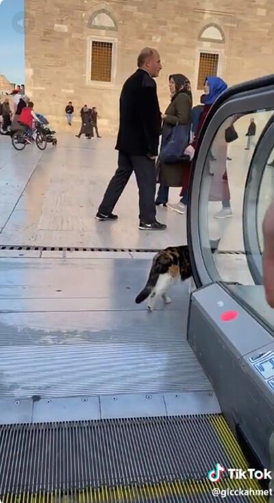 猫、エスカレーターを乗りこなす05