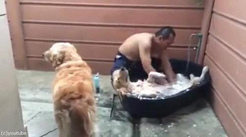 シャンプー犬02