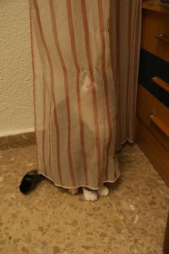 潜む猫02