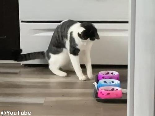アライグマみたいにご飯を食べる猫00