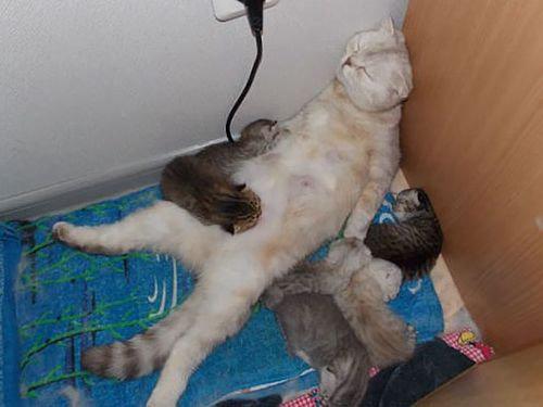 ママ猫&犬が子育てに奮闘してるときの顔14