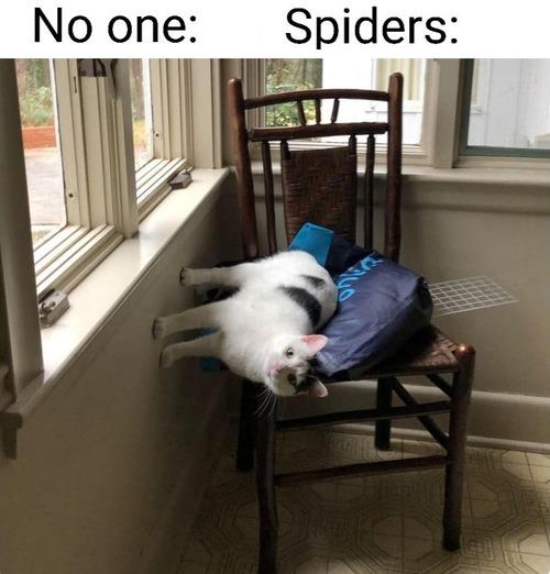 スパイダーマンみたいな猫01