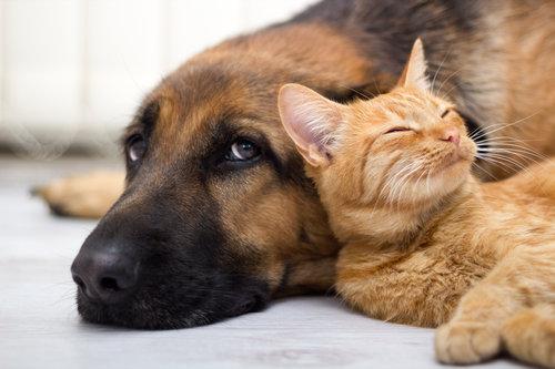 他の動物と仲良くする猫11