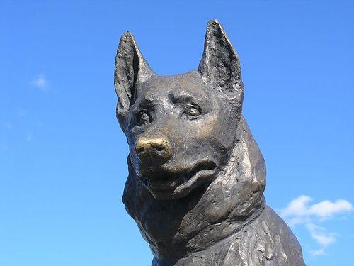 ロシア版の忠犬ハチ公07