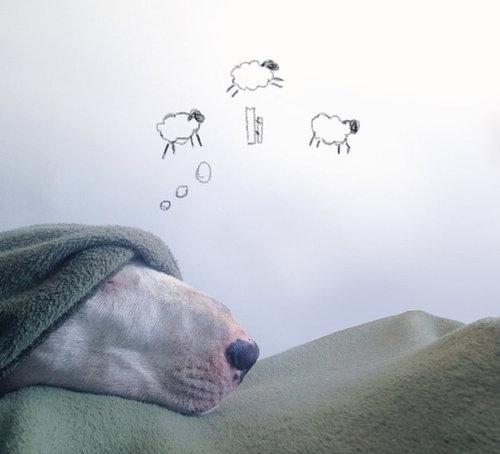 愛犬と10倍楽しむ方法09