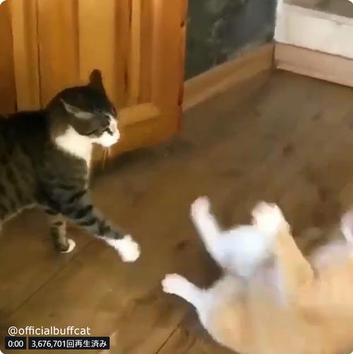 にらみあう猫…まさかのオチに笑う04