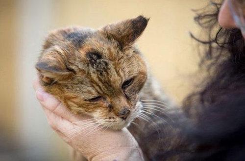 最高齢の猫05