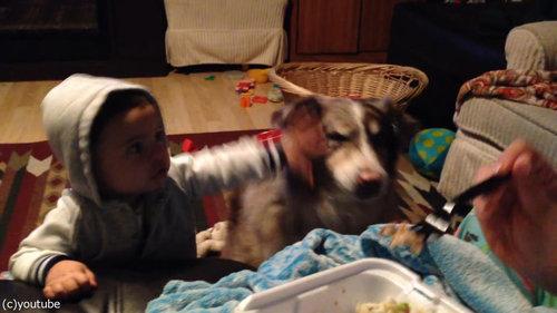 隣の犬「ママー」赤ちゃん「えっ」04