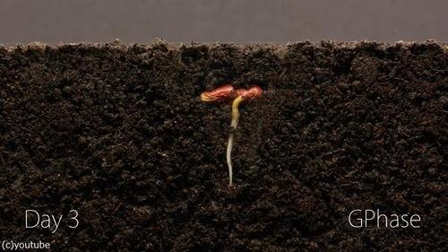 植物タイムラプス02