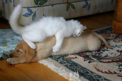 疲れ果てた犬と猫16