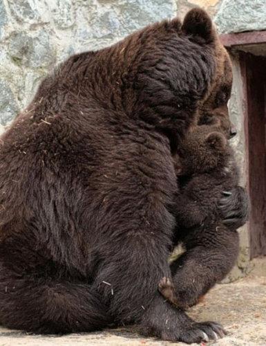 クマの親子04