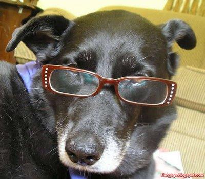 メガネ犬03