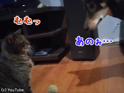 ボールで遊びたい犬と猫00