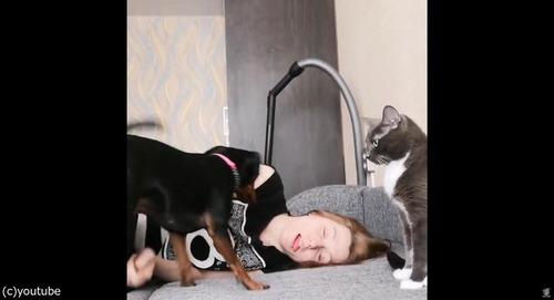 飼い主が倒れた縁起をしたとき、犬と猫の違い01