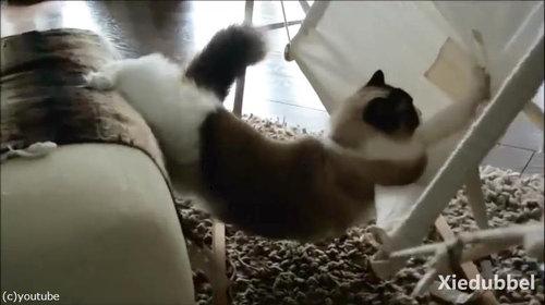 猫にハンモックを与えたけどうまく乗れない02