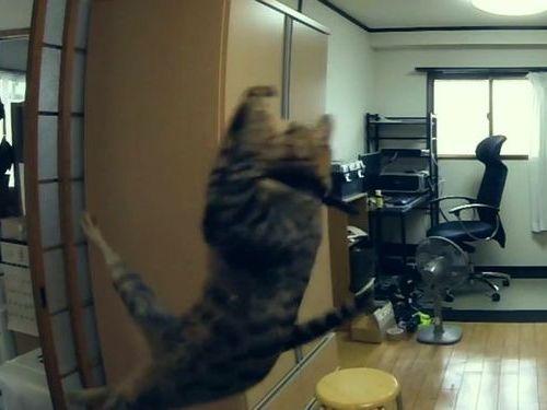 猫が空中でスーパーキャッチ01