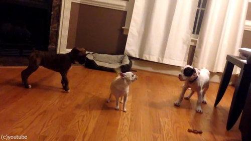犬2匹がベッドの追い出しに成功04