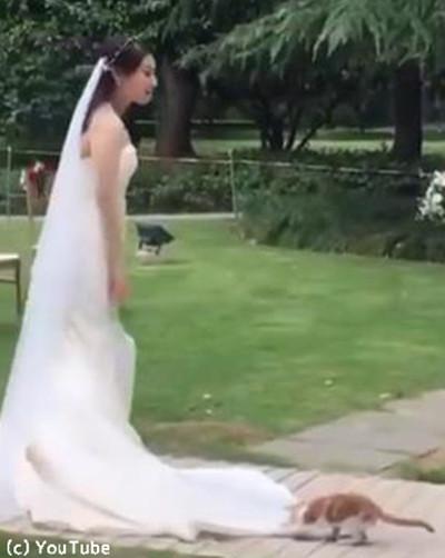 結婚式にキュートなお客さん04