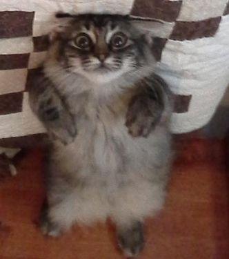 猫の視線03