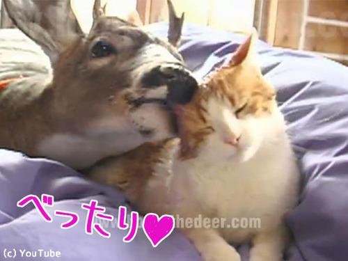 鹿と仲良しな猫00