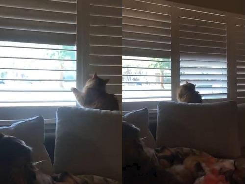 猫、お父さんに反抗する03