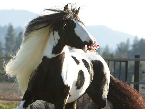 立派な口ヒゲのある馬00