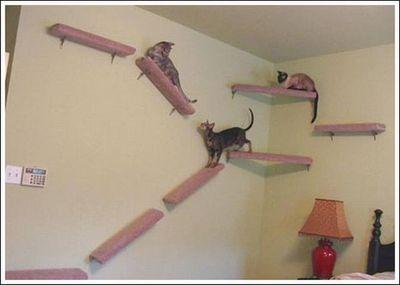 猫用の足場01