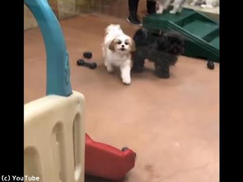 ペットホテルに預けられていた犬、飼い主を見つけた瞬間…00