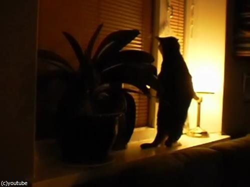 猫のストレッチをいろんな角度から眺めてみた07