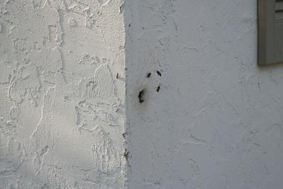 「家にハチの巣が…」素人が繰り広げたムチャな死闘03