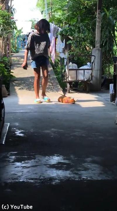 猫「帰りたくないニャ」01