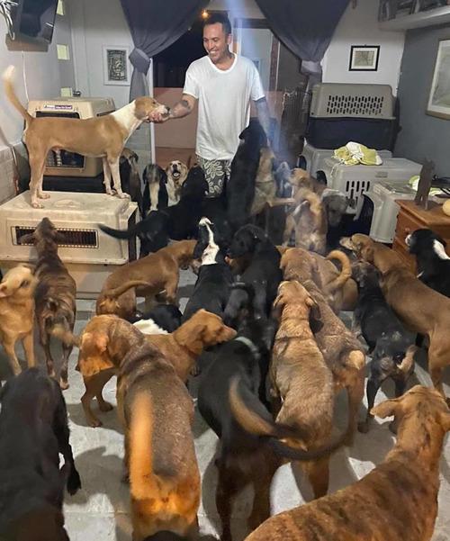 ハリケーンで300匹の犬を自宅で保護01