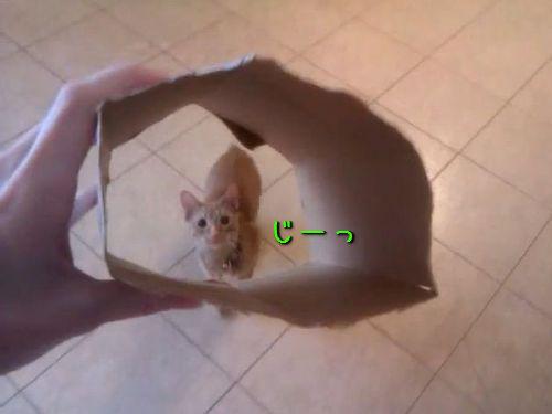 猫と箱00