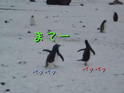 ペンギン追いかけっこ