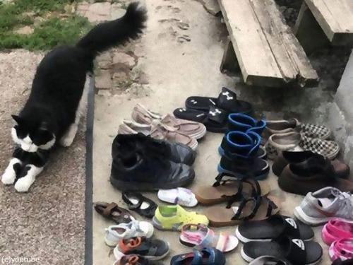 靴泥棒の猫にGPSを付けてみた00