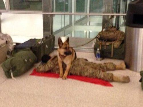 空港の軍犬02