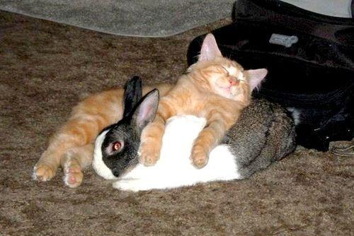 動物枕06 ウサギまくらは気持ち良すぎるニャン。 まくらというより猫ベッド。  他の動物をまくら
