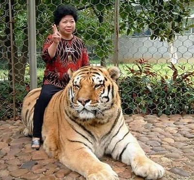 動物ライダー17