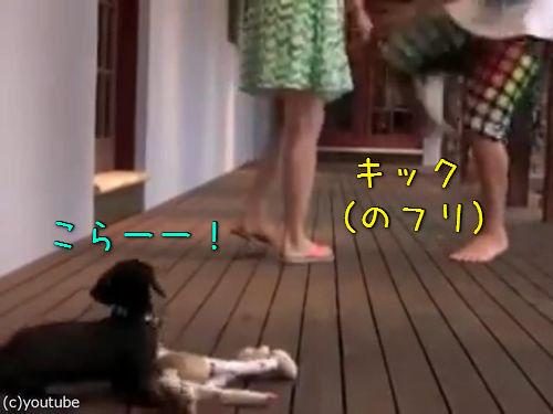 レディを守る小さな子犬00