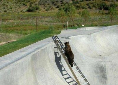 クマの脱出03