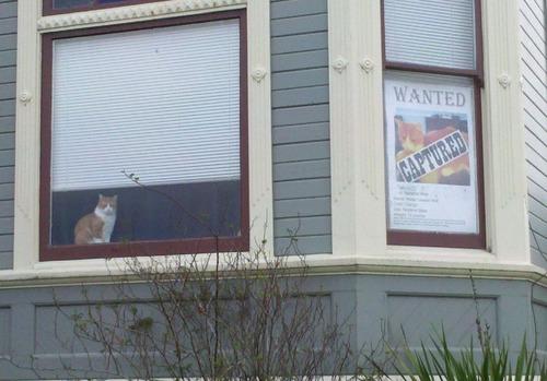 猫が見つかった01