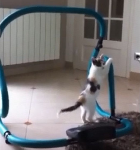 ハードトレーニングする猫01