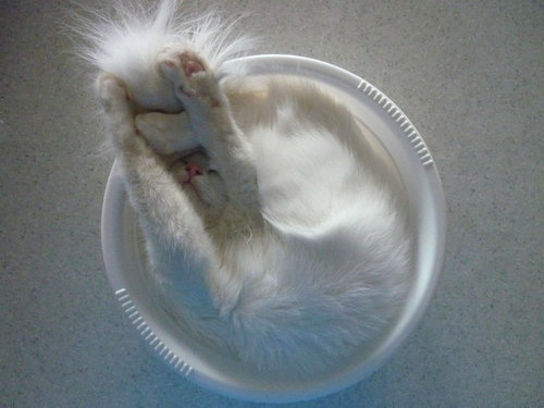 どこでも寝る猫たち09