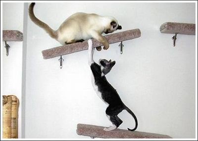 猫用の足場08