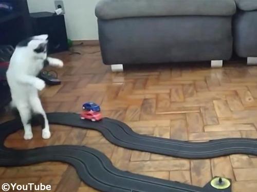 クルマのおもちゃにハイテンションになる猫00