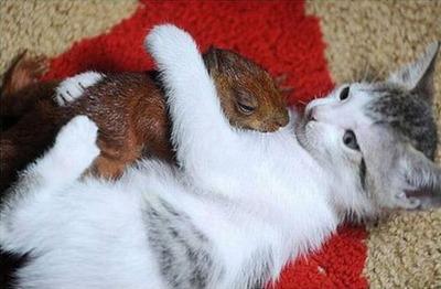 リスと猫01